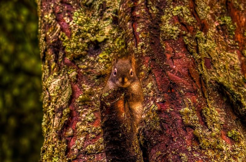 Squirrel 12-31-12