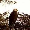 Eagle1-25-05