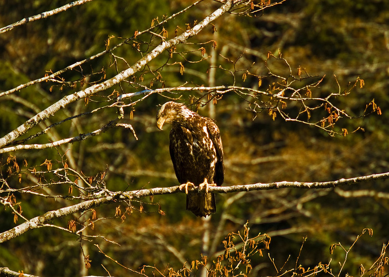Young Eagle4-12-10