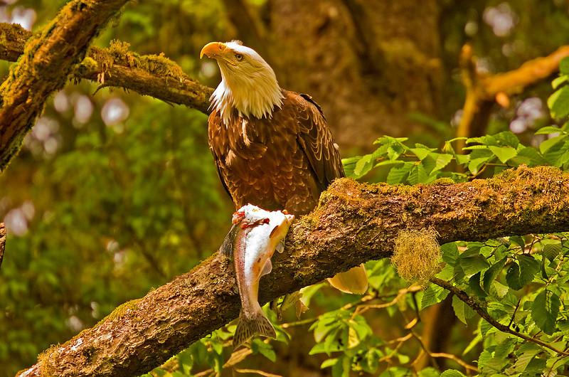 Eagle&Fish1