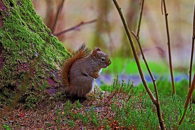 Squirrel 4-30-11