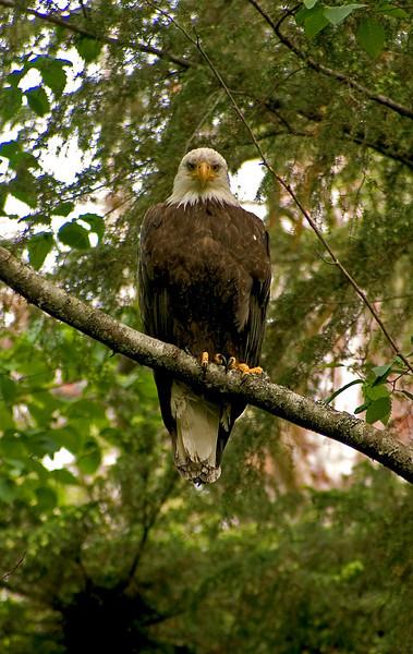 Eagle6-26-05