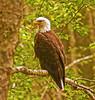 Eagle 7-14-09