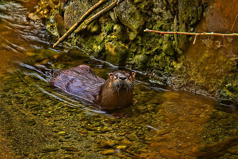 River Otter 4-30-11