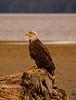 Eagle4-26-06