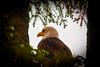 Eagle6-9-09