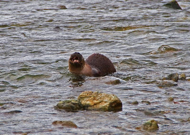 Otter1-5-06(2)