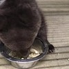 Nome Orphaned Cub 2