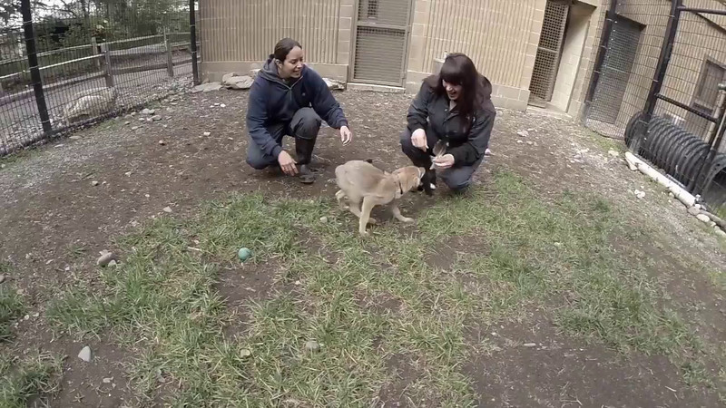 LITTLE COYOTE VIDEO