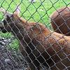 zoos orphaned moose