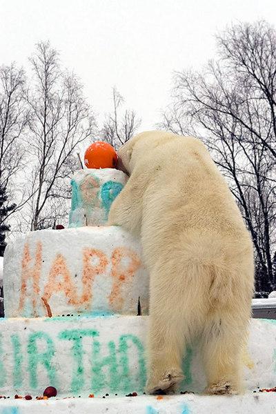 polarbirthday1345