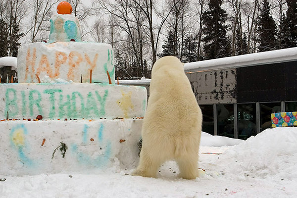 polarbirthday1347