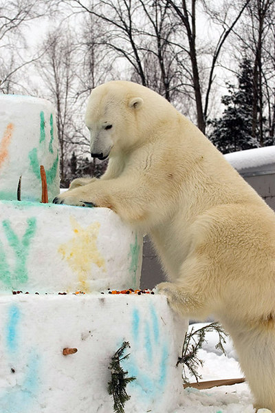 polarbirthday1335