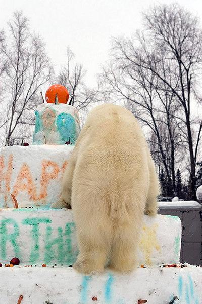 polarbirthday1341