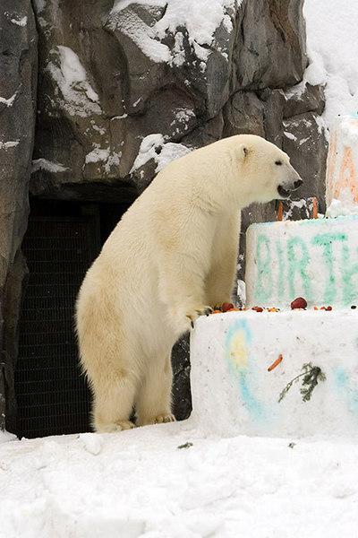 polarbirthday1359