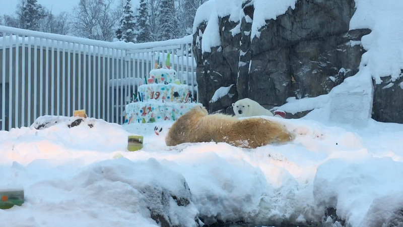 polar bear birthday