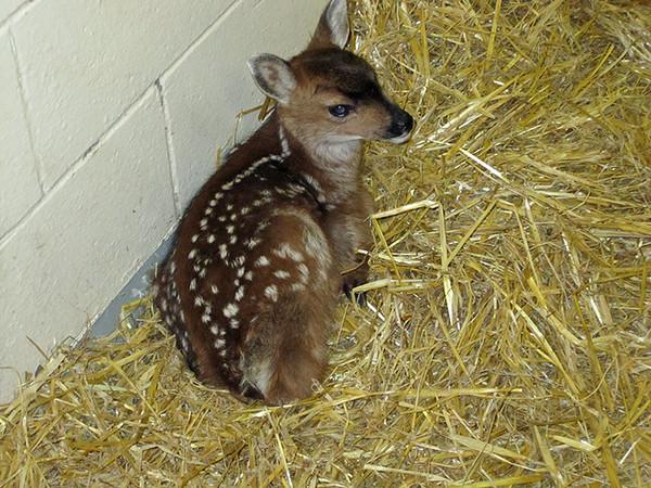 deer_1689