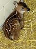 deer_1692
