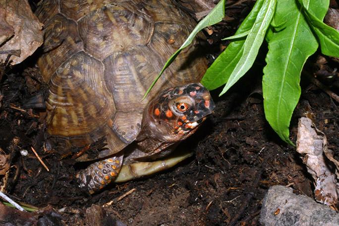 turtle3869