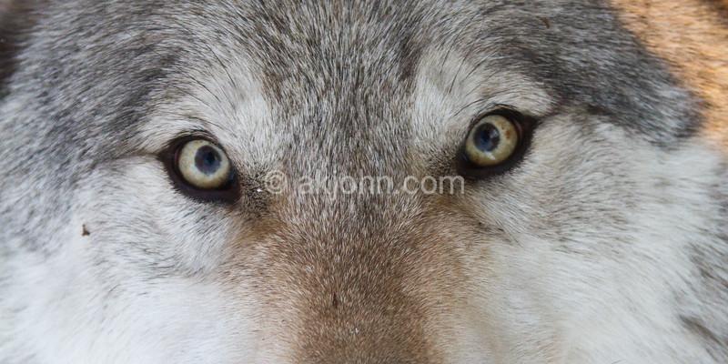 eyes 0616