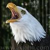 eagle9042