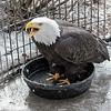 eagle0120