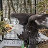 eagle4278