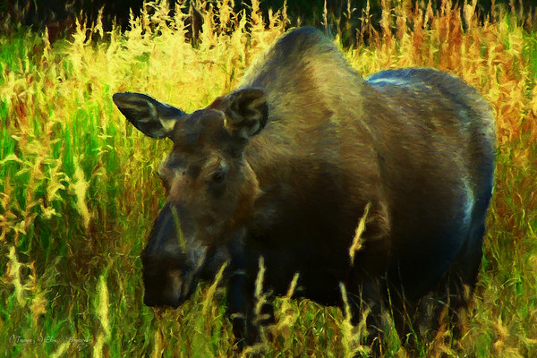 3029-TI-4199   Moose A-La-Mode