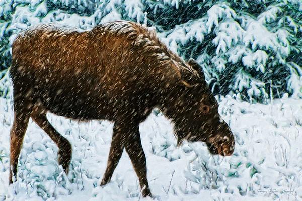 3108-TI-4207   First Snowfall