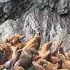 July Denali Trip 10 348