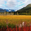 Glenwood AK marsh Sept 2009