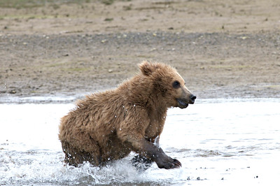 Splashing Cub Having Fun