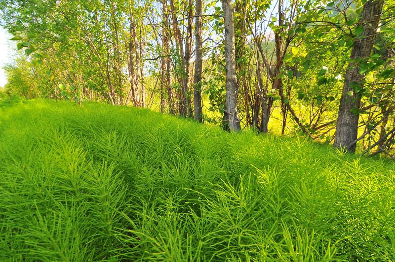 Spring in Alaska 040