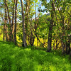 Spring in Alaska 043