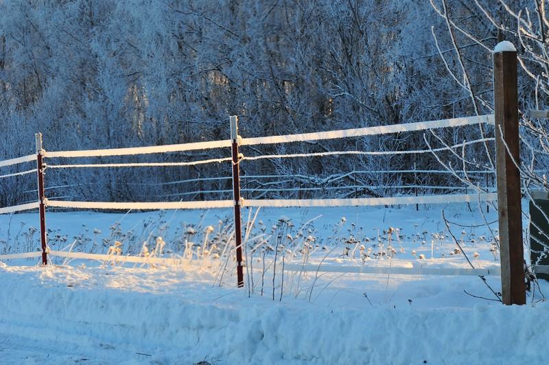 Wasilla December 045