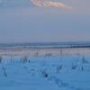 Wasilla December 081