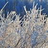 Wasilla December 043