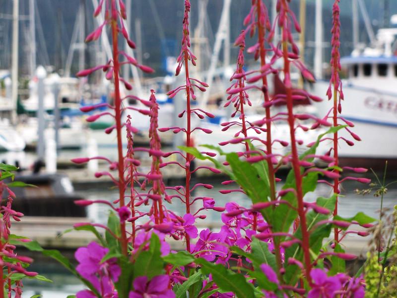 Seward July 2010 047