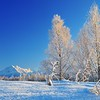 Wasilla December 040