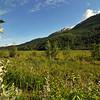 Spring in Alaska 035