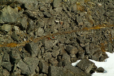 This is the original Chilkook Trail littered with artifacts from the gold rush still left in place where they were dropped by miners going over the pass.