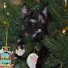 Kitten in the Christmas Tree