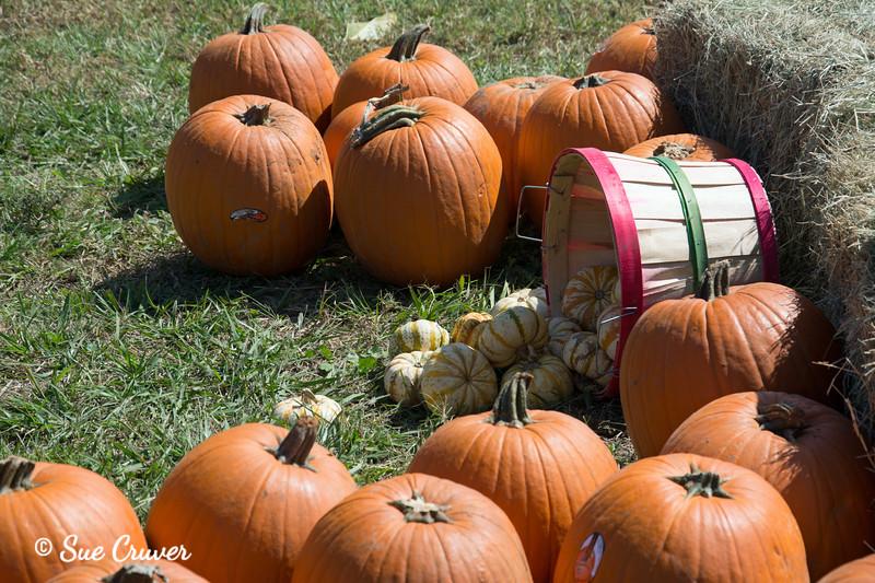 Baskets of Pumpkins