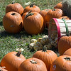 Baskets of Pumpkins