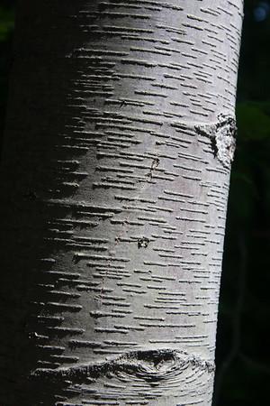 Textured trunk