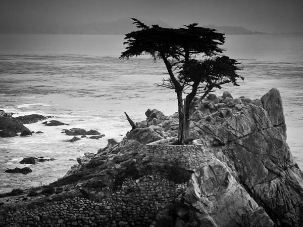 Lone Cypress<br /> Monterrey, California