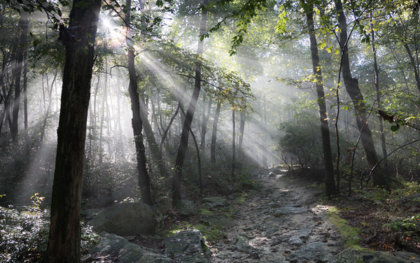 Sunbeams<br /> Winner, Annual Color Print Competition 2014<br /> Monmouth Camera Club