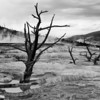 Mammoth Hot Springs, monochrome