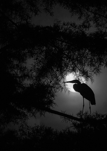 Heron Supermoon