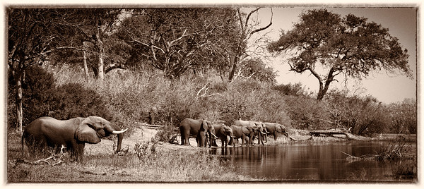 Time for a drink, Okavango Delta